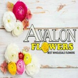 Avalon Best Wholesale Flowers