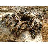 Pest Control Bonython