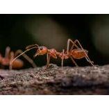 Pest Control Thornlands