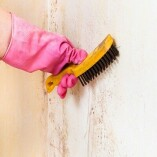 Mold Experts of Charlotte