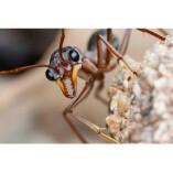 Pest Control Truganina